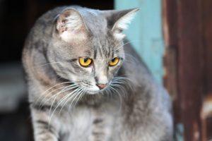 狙っている猫の画像